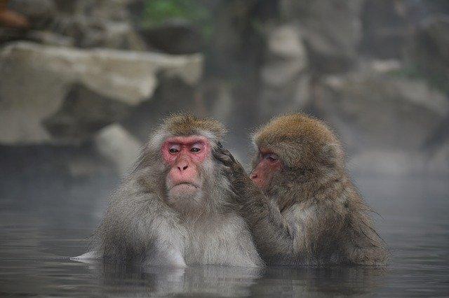 村越芽生のwikiプロフや経歴!女将してる温泉の場所はどこ?家族について!