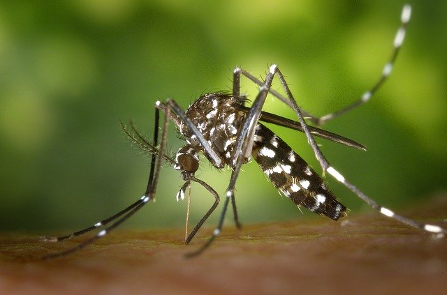 水野達男の学歴や年収!マラリヤを予防する蚊帳との関係!アフリカの使用国の数!