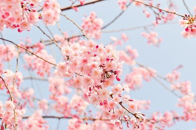 末永桜花のwikiプロフや経歴!高校はどこ?刈谷ゆかりの地は?